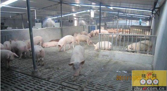 温氏养猪猪舍设计图展示