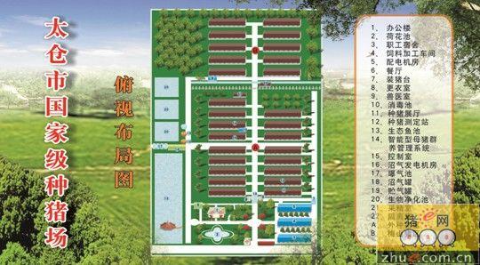 养猪场平面布局设计图